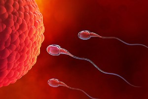 Spermatozoa and Egg. The side effects of Nexplanon usually occur during the first 6 to 12 months