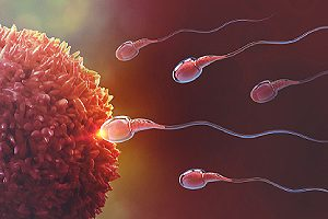 Sperm and egg cell. Barrier methods of contraception block the sperm from reaching an egg to prevent pregnancy